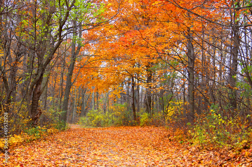 Fototapety, obrazy: Autumn alley in Mayberry state park
