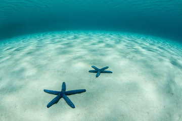 Blue Sea Stars on Sand