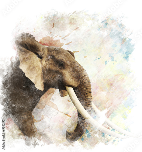 Photo  Watercolor Image Of  Elephant