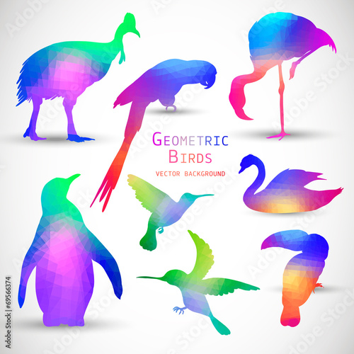 Poster Geometrische dieren Set of Colorful Geometric Silhouettes Birds