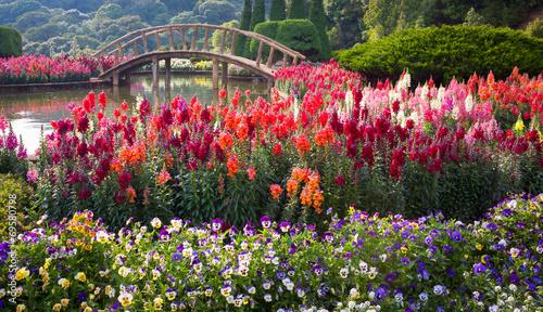 fototapeta na szkło Flower Garden