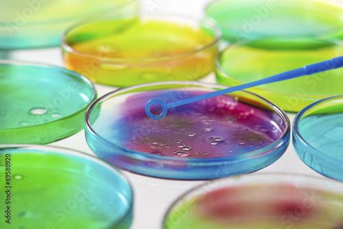 Fotografía  Boîte de Petri, ADN, Ciencia, Investigación -