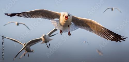 Obraz na plátne Seagull