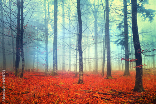 Aluminium Prints Autumn Autumn light forest scene
