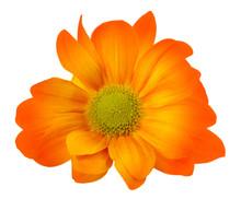 Colorful Chrysanthemum Flower,...