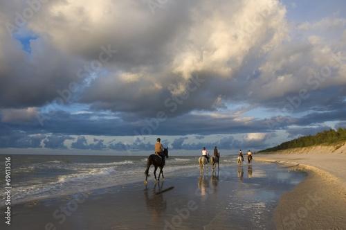 Poster de jardin Vache Horses on a beach