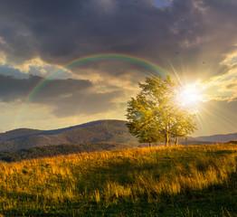 Fototapeta na wymiar trees near valley in mountains on hillside at sunset