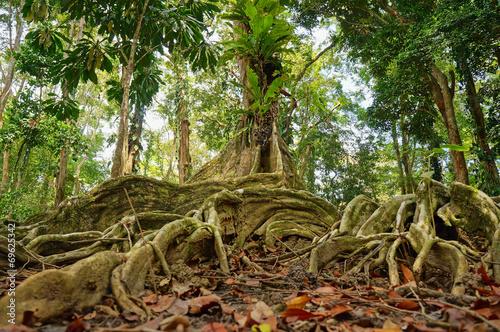 tropikalny-drzewo-w-dzungli-costa-rica