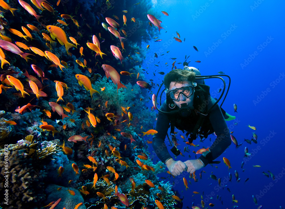 Fototapeta Diver swims through tropical fish on coral reef