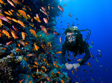 Diver Swims Through Tropical F...