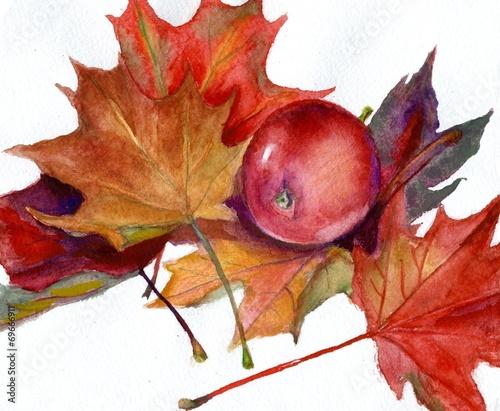 akwarela-czerwone-jablko-i-jesienne-liscie