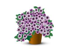 Bush Petunias In A Pot