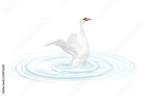 Foto op Canvas Zwaan Bird swan