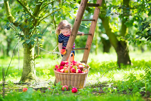 Valokuva  Little girl in an apple garden
