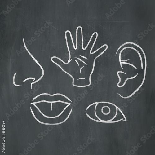 Chalk 5 Senses Poster