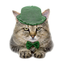 Cat In A Green Hat And A Butte...