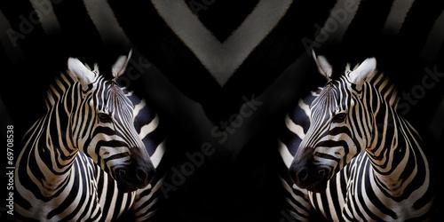 Door stickers Zebra A Headshot of a Burchell's Zebra