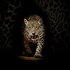 Fototapeta Zwierzęta Leopard portrait