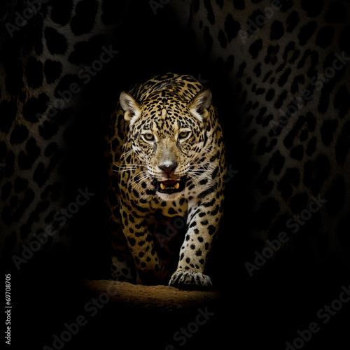 Foto auf Acrylglas Bestsellers Leopard portrait