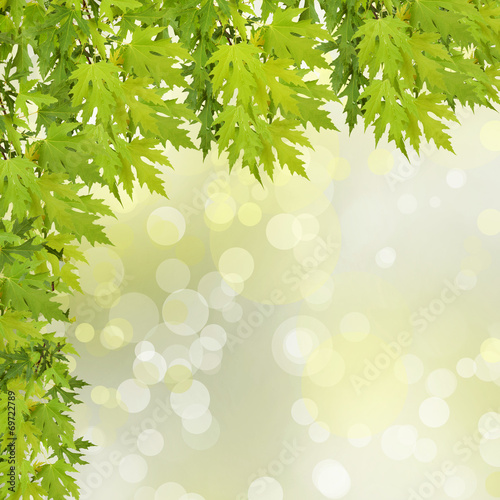 Canvas Prints Narcissus Green branch of a tree on abstract background with bokeh effect