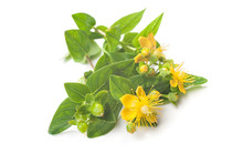 St Johns Wort Isolated