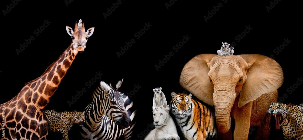 Fototapeta A group of animals are together on a black background with text
