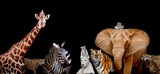 Fototapeta Animals - A group of animals are together on a black background with text
