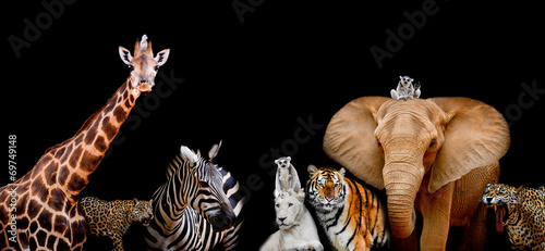 A group of animals are together on a black background with text