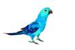 Beautiful colorful bird