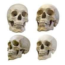 Set Of Four Human Skull Isolat...