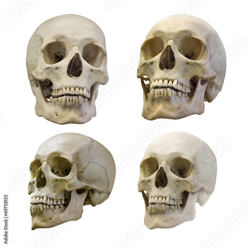 set of four human skull isolated on white Canvas Print