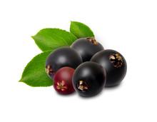 Elderberry Isolated