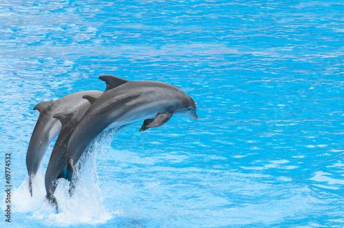 Foto op Plexiglas Dolfijnen dolphins swimming