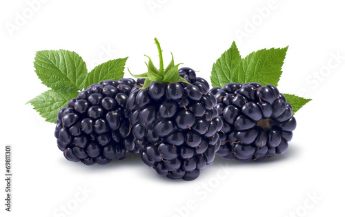 Fotografija  Line of three blackberries isolated on white background