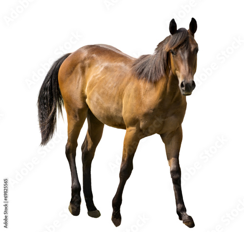 Fotobehang Paarden Horse Isolated