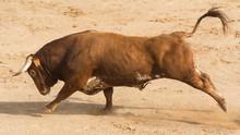 Toro Bravo Español