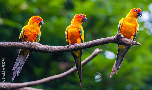 Exotic parrots sit on a branch, wildlife #69837941