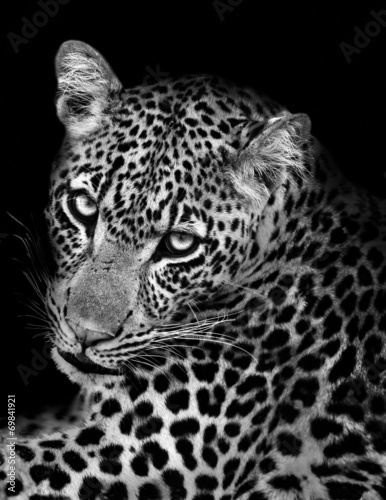 Tuinposter Luipaard Leopard in Black and White