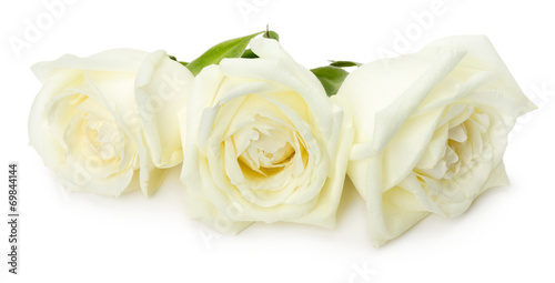 Papiers peints Roses white roses isolated on the white background