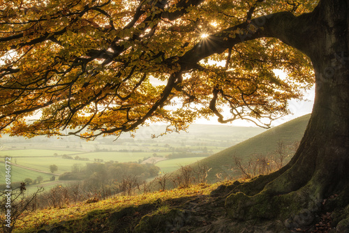 Stunning Autumn morning sunlight lights landscape through golden