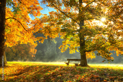 Fotobehang Bomen Beautiful autumn tree with fallen dry leaves