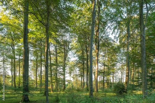 Garden Poster Forest lichter Wald