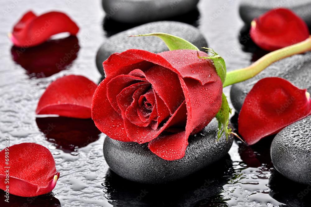 Fototapeta Czerwona róża na kamieniu bazaltowym