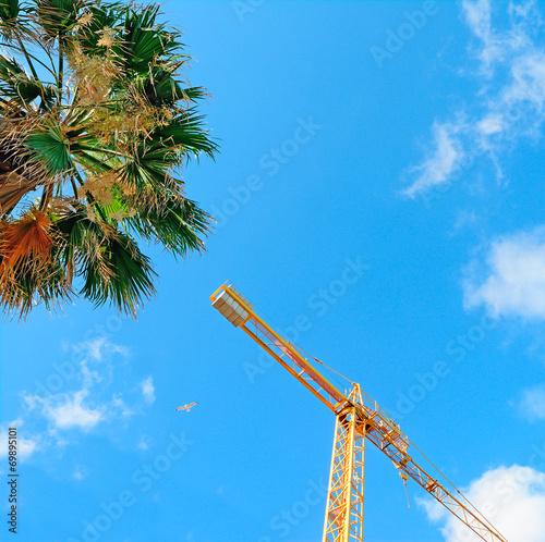 Palm tree crane and palms