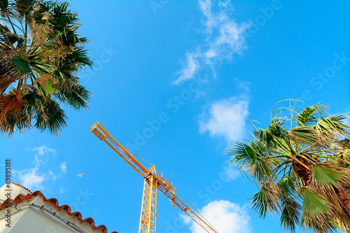Canvas Prints Palm tree crane and palms