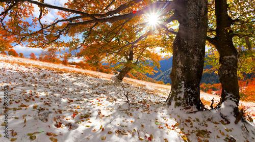 Aluminium Prints Dark grey First snow in the autumn forest