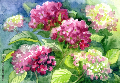 """Drawing """"Blossoming Hydrangeas"""". Paper, water color"""