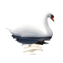 Swan, Vector Illustration