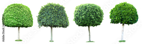 Foto  Collage of green trees isolated on white