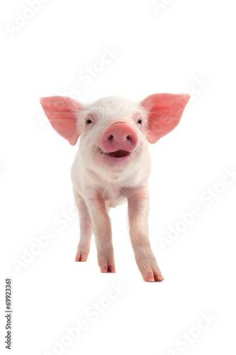 Fotografia smile pig